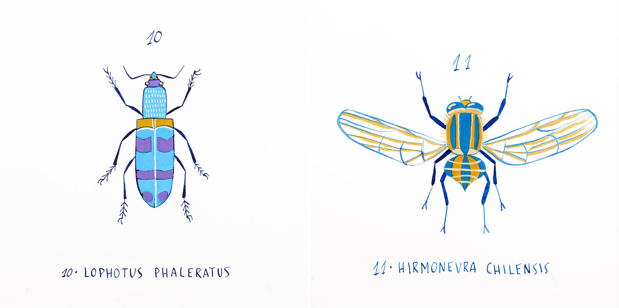 """Serie """"Atlas"""", dibujos a tinta y gouache, propuesta personal basada en los estudios del naturalista francés Claudio Gay"""
