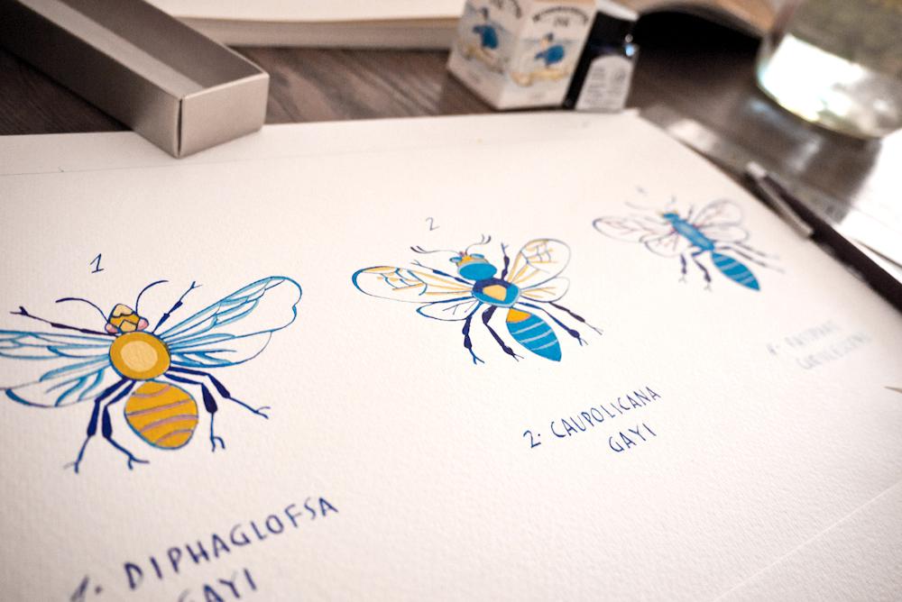proceso insectos
